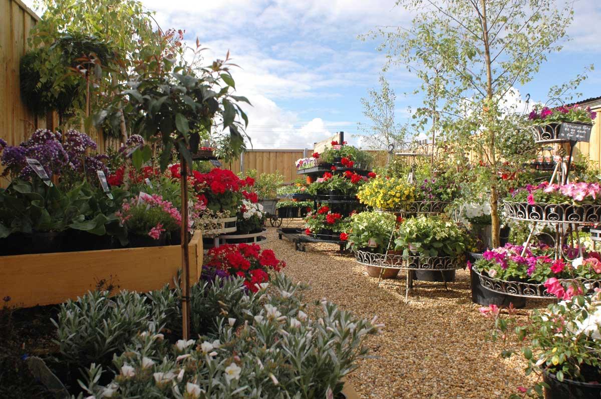 potted pear garden nursery